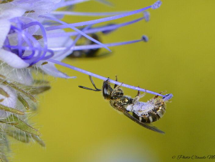 La Macro des Insectes