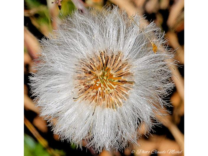 Les Fleurs - La Macro des Fleurs