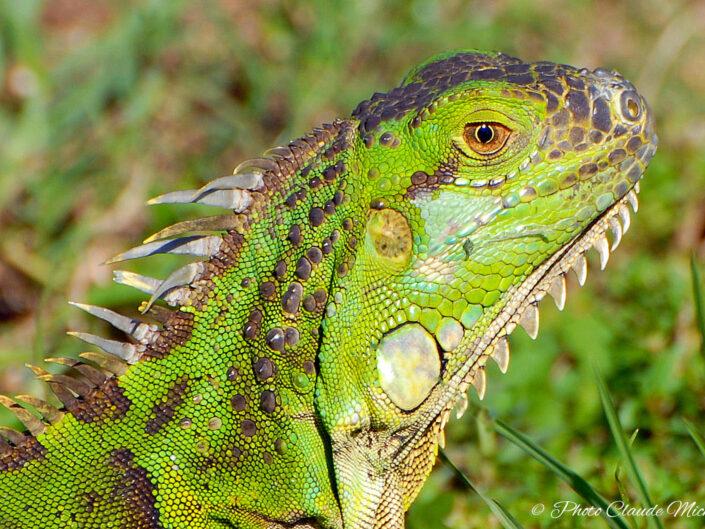 Les Mammifères - Les Reptiles<br />Les Batraciens