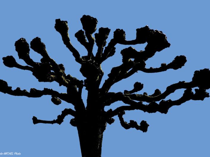 Les Arbres - Les Plantes - Les Champignons